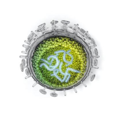 Influenza-Virus
